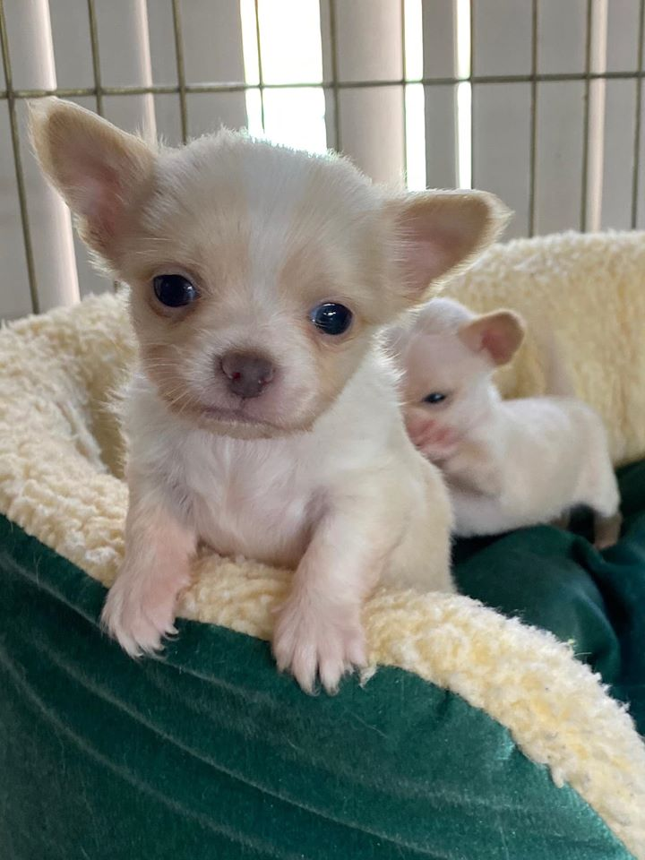 Since you're going to be cooped up in your house for a while, why not spend it with some adorable pups like these, which will soon be available for adoption at the Humane Society of the Nature Coast?