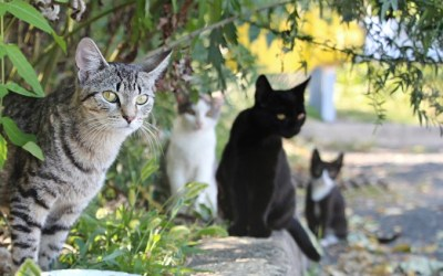 Hernando County's Fabulous Feral Cat Program