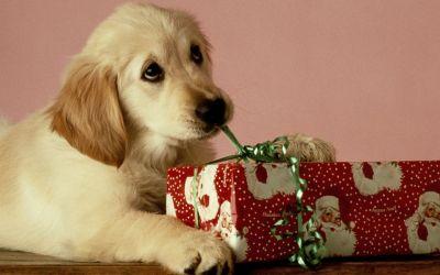 Six Tips to Keep Your Fur Babies Safe This Christmas!
