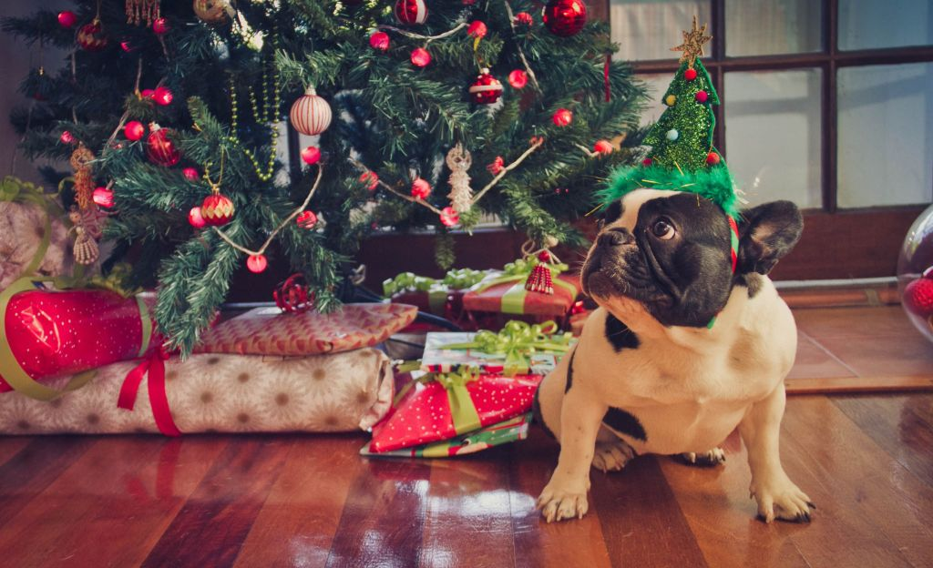 Holidays can pose special challenges for pet owners.
