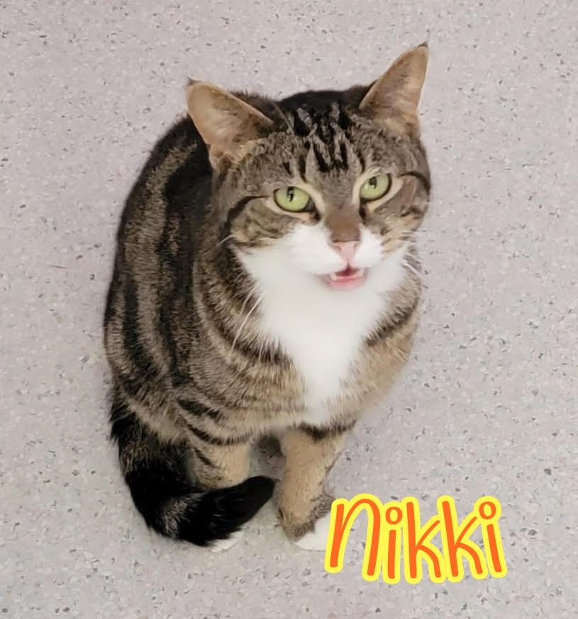 Nikki: Female Tabby & White DOB: 9/10/17