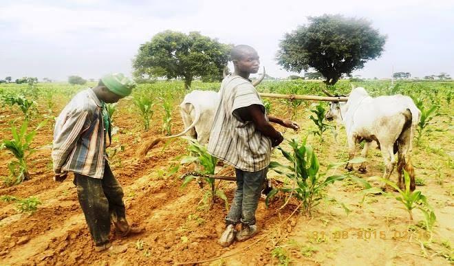 Peace Gradually Returning To Zamfara Communities But Farmers Face Difficulties Accessing Farmlands