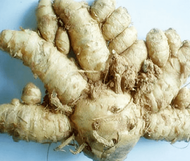 Home Remedies To Tighten Vaginal Walls Curcuma Comosa