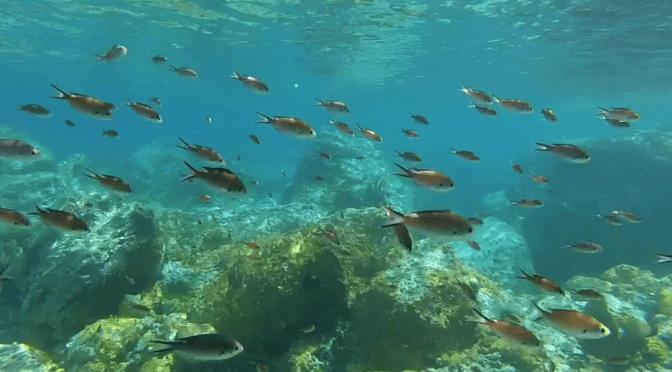 Photos d'un banc de petits poissons orangés