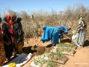Planting sack gardens in Somalia.
