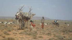 Somaliland nomads