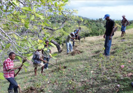 hands-on agriculture experience in Haiti