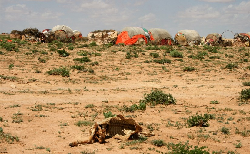 image of the drought that contributes to the food crisis in Somalia