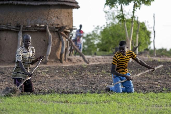 two men working in a vegetable garden in Kenya