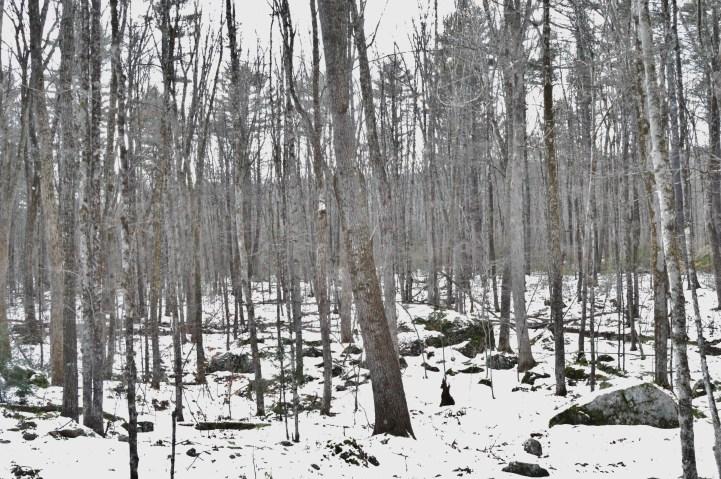 Mass Forest