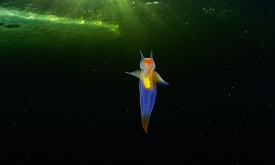 Marine Biologist Captures Breathtaking Photos Of Sea Angels