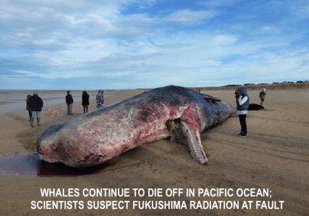 dead-whale-fukushima