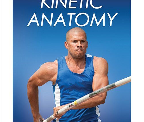 anatomy archives | human kinetics sport, health & fitness blog, Muscles