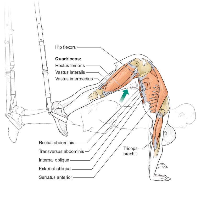 Core exercises for cyclists - Suspension Pike