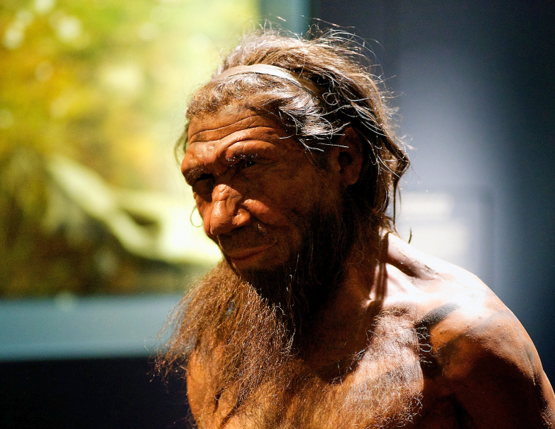 faithfull reconstruction of neanderthal man in a museum
