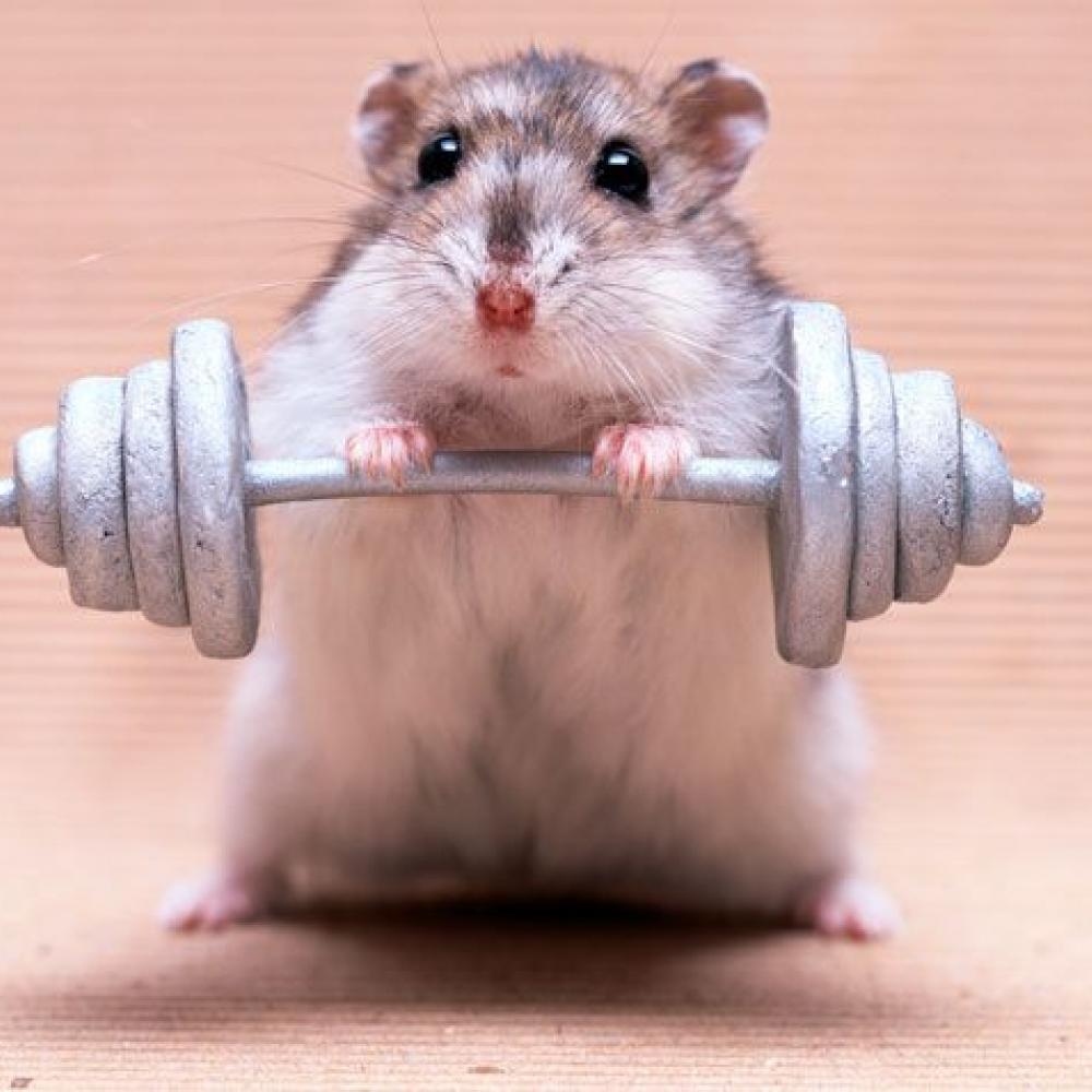 mouse with dumb bell