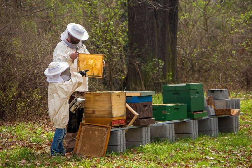young and old beekeepers tending hives