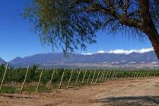 Country de Viñas – Tolombón – Salta