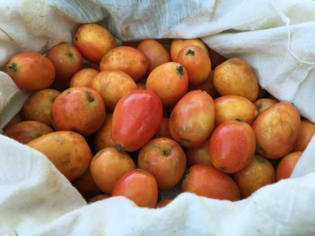 Foraged crab apples.