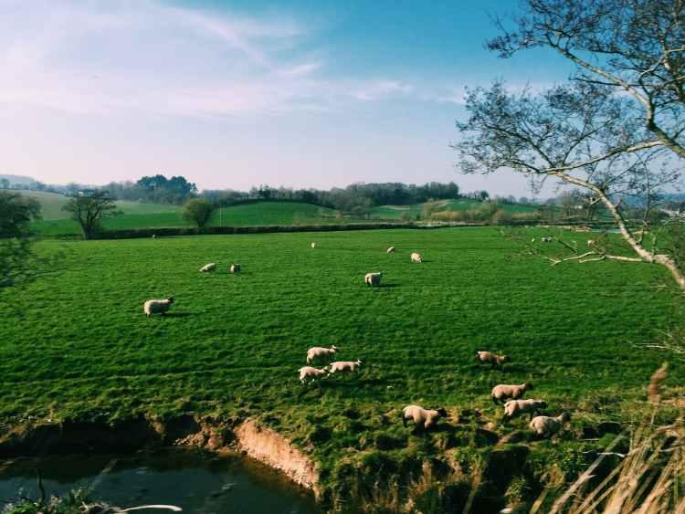 paysage de campagne.