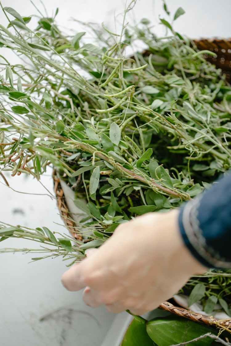 crop gardener with fresh thyme sprigs in wicker basket