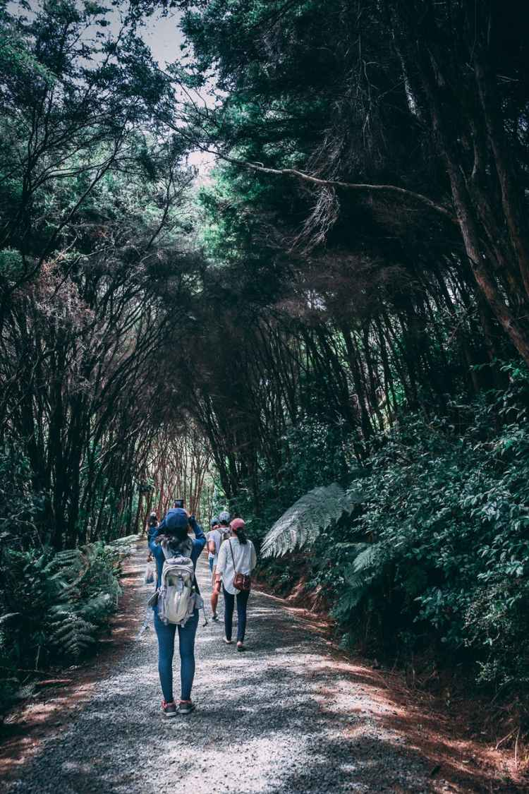 group of people walking in forest