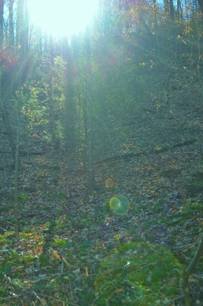 Cresting Sun (with refractive woodland fairy orbs)