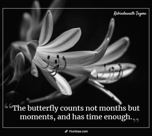 The butterfly counts not months but moments, and has time enough. By Rabindranath Tagore on Humbaa.com
