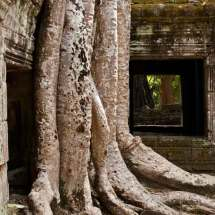 Ta-Prohm-Temple-(roots)