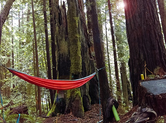 A wide angle view of one of my choice hammock spots in the redwood forest behind campus. Beautiful day today, so great to get out there and experience nature!