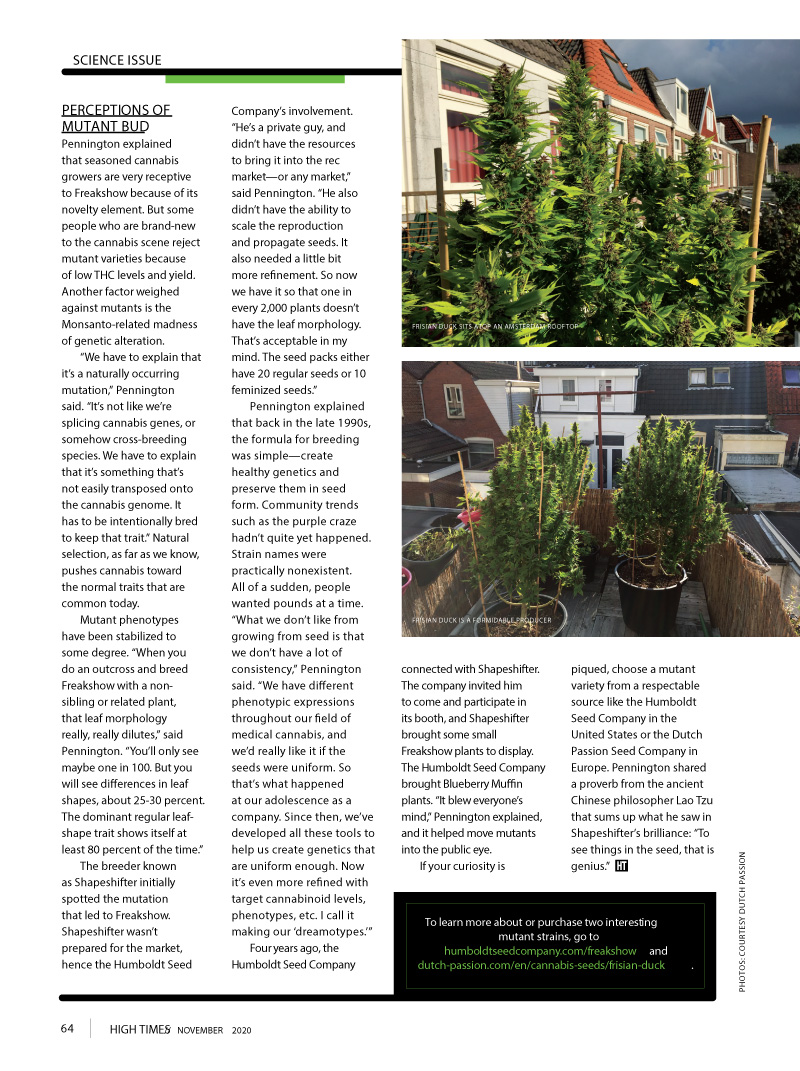 HIGH TIMES ARTICLE