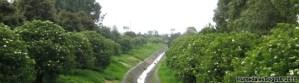 Humedal de Bonanza