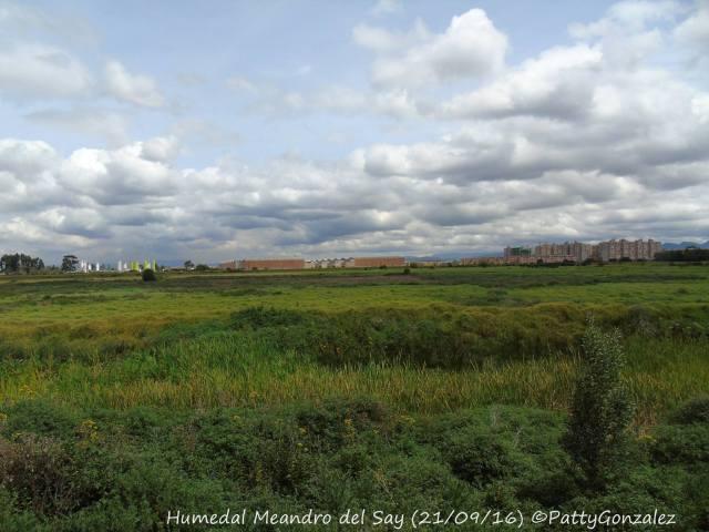 Meandro del Say seco 2016