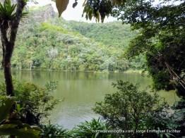 Vegetación, Laguna El Tabacal