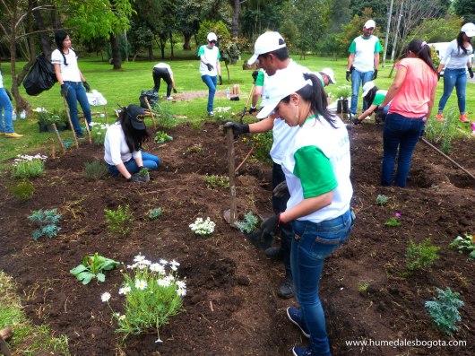Creación de jardines funcionales