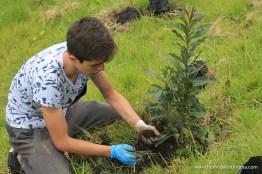 plantacion_arboles_hpc (203 de 223)