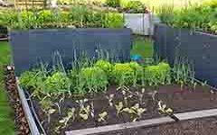 namen-uporabe-zelenjavni vrt-small-bitrate