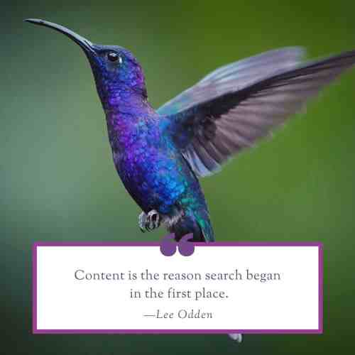 SEO by Hummingbird Marketing in Seattle and Cleveland