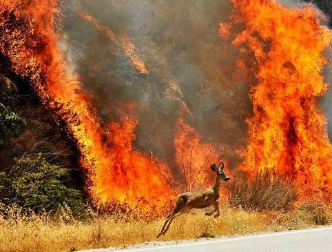 tennessee-fire-deer