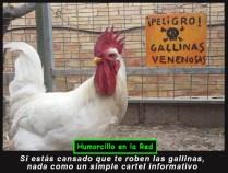 gallina-venenosa