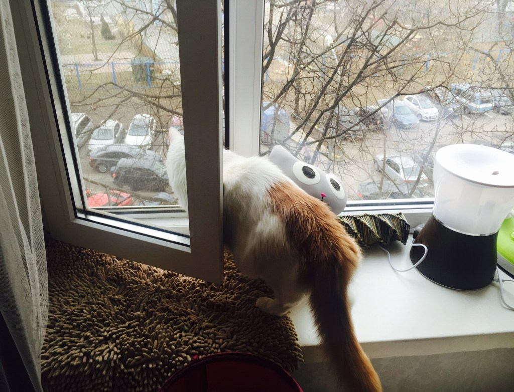 Wir führen doch alle ein Katzenleben