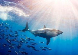 S-s-shark!!