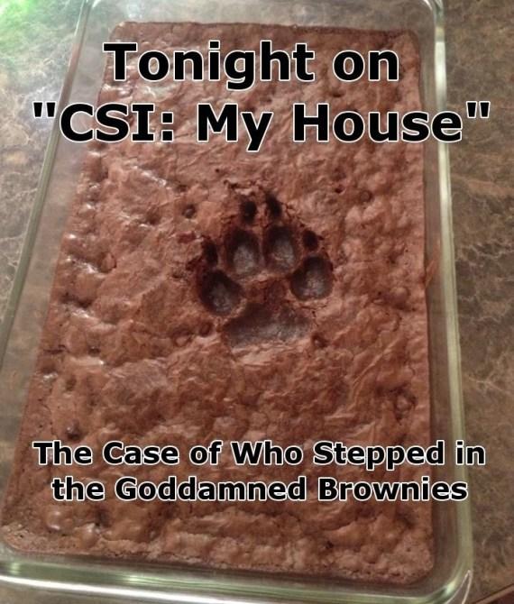 CSIMyHouse