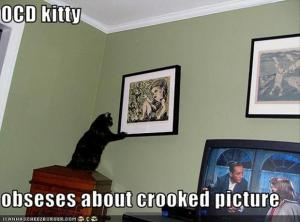 a-funny-ocd-pictures-cat-pictures