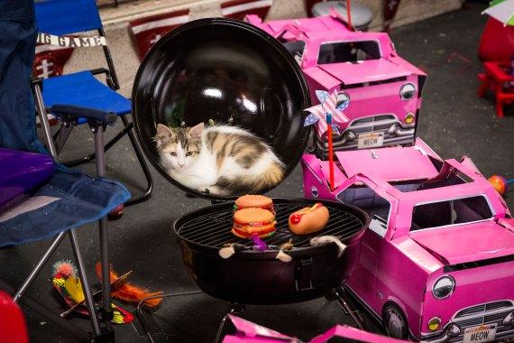 Hallmark Channel's Kitten Bowl II tailgate party! Copyright 2015 Crown Media United States, LLC/Photographer: Marc Lemoine.