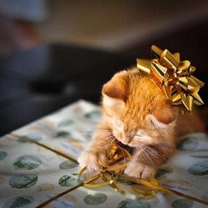 kitten_bows