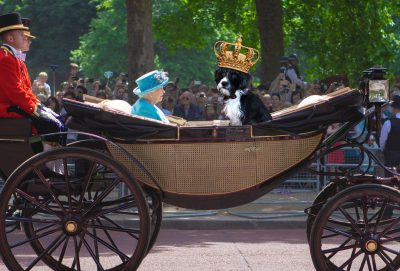 For royal dogs, the public scrutiny of palace life is outweighed by really soft bed linens and stylish bling.