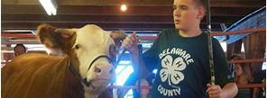 Image result for 4-h auction