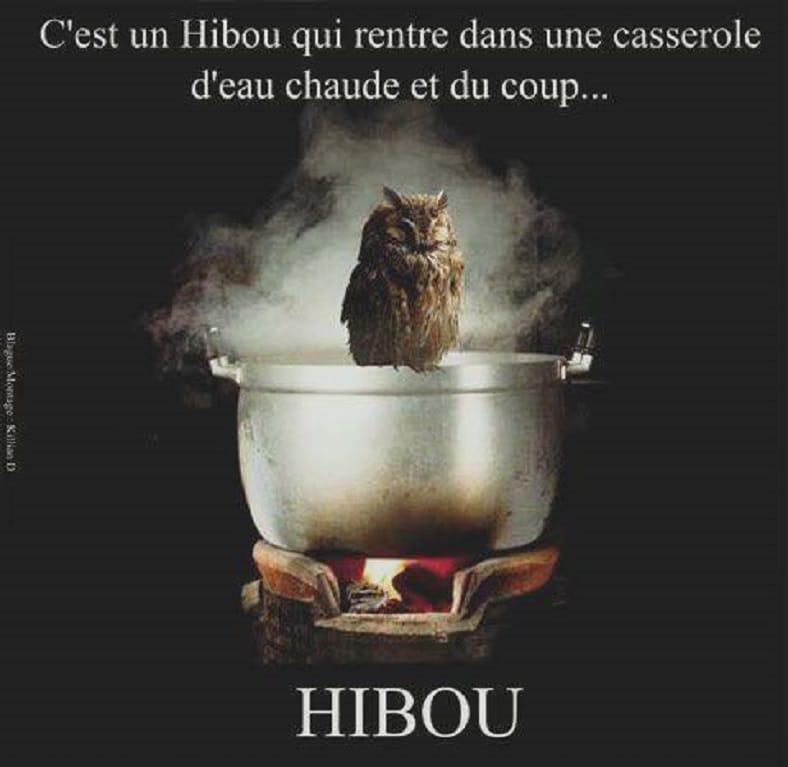 C'est un Hibou qui rentre dans une casserole d'eau chaude