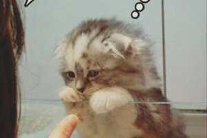 Coucou jolie petit chaton